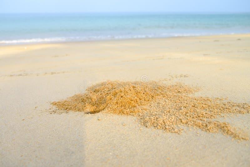 O furo do caranguejo na praia foto de stock royalty free