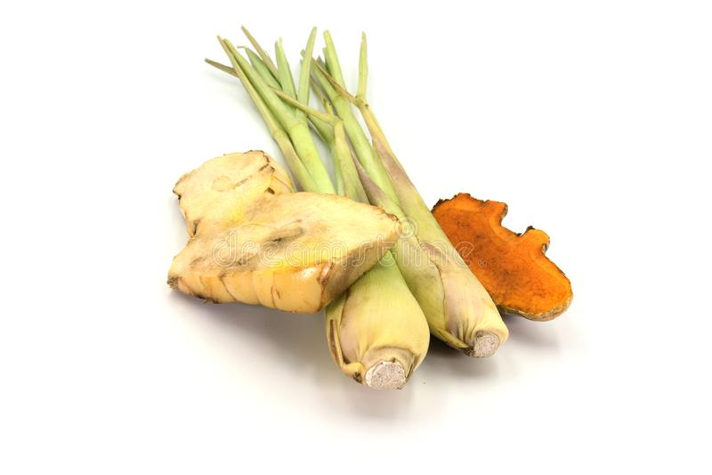 O Galangal, a cúrcuma, e o nardo são ervas isoladas no fundo branco imagem de stock royalty free