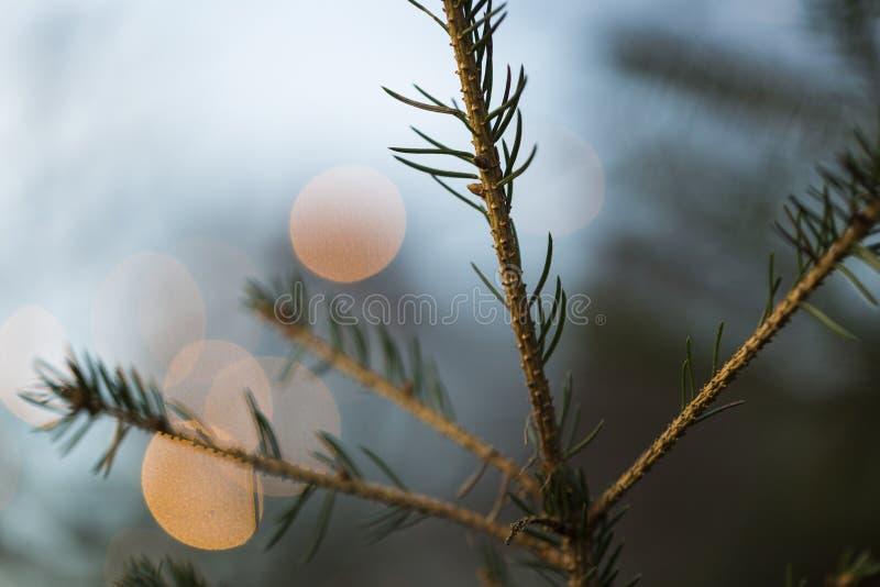 O galho do Natal com círculo do borrão ilumina o fundo imagens de stock royalty free