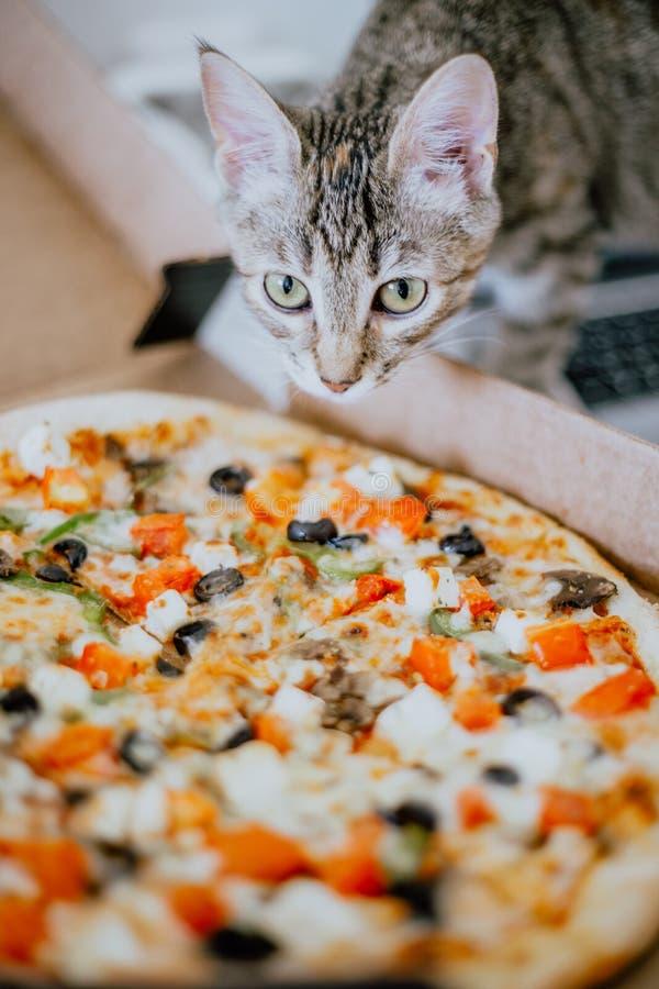 O gatinho ascendente pr?ximo aspira a pizza fotografia de stock royalty free