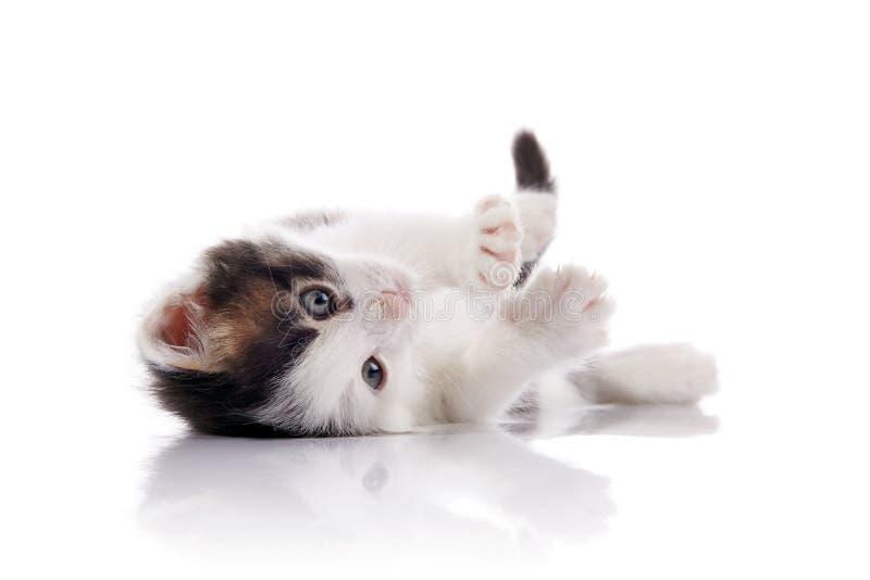 O gatinho bonito, branco com pontos fotografia de stock royalty free