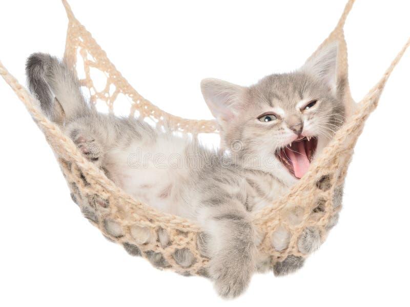 O gatinho bonito do gato malhado boceja encontrando-se em uma rede foto de stock royalty free