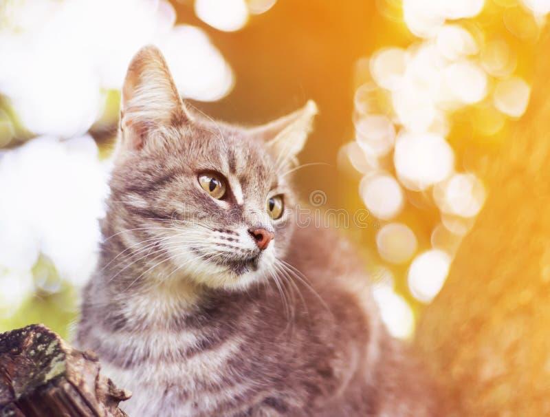 O gatinho brincalhão bonito do gato malhado está olhando o assento dianteiro no trun imagem de stock