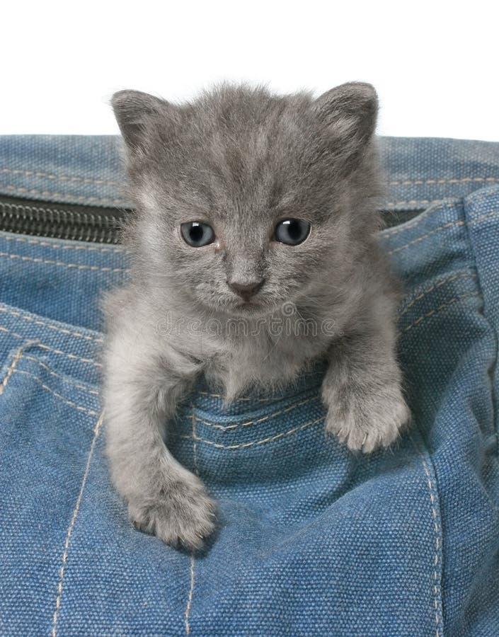 O gatinho cinzento pequeno olha fora das calças de brim ensaca perto foto de stock