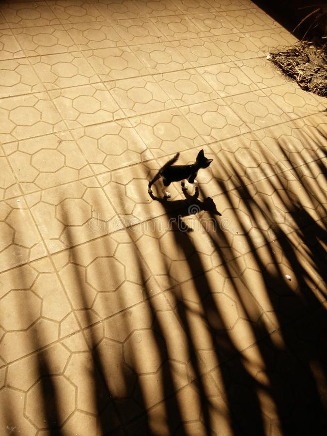 O gatinho da sombra imagens de stock