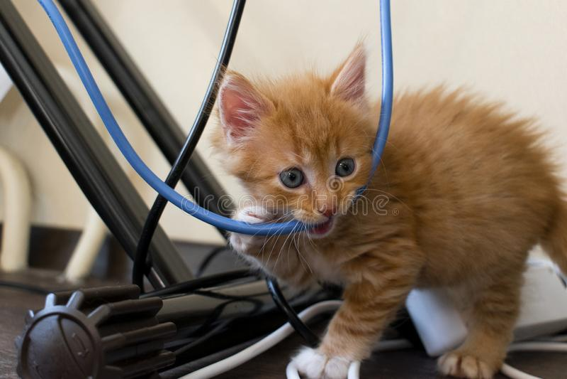 O gatinho do gengibre mastiga o fio close-up, luz suave imagens de stock royalty free