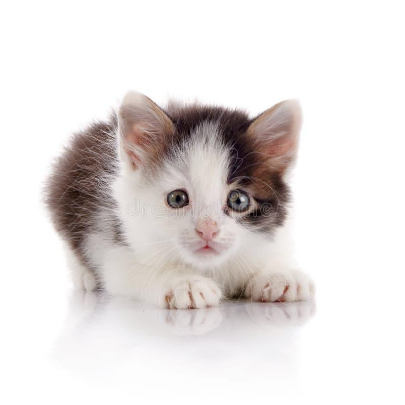 O gatinho doméstico manchado assustado imagem de stock royalty free