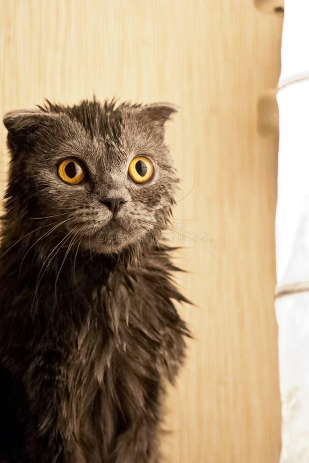 O gatinho está molhado fotografia de stock