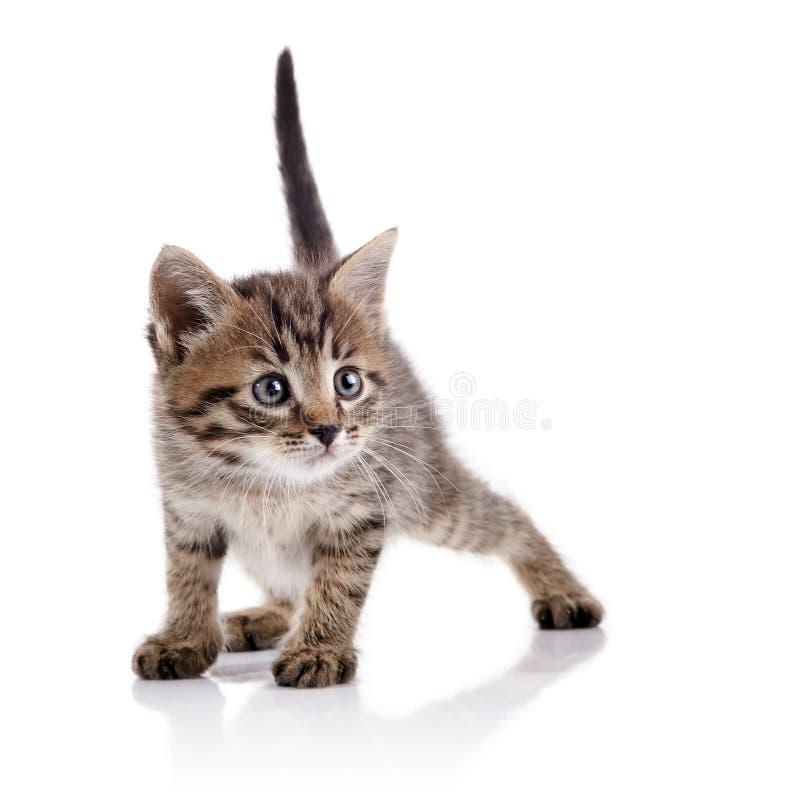 O gatinho guardado bonito listrado imagem de stock royalty free