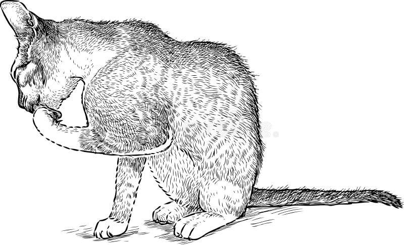 O gatinho lambe uma pata ilustração stock