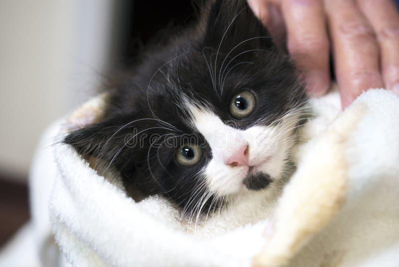 O gatinho longo preto e branco do cabelo envolveu em uma toalha imagem de stock