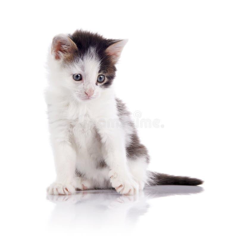O gatinho manchado bonito imagens de stock