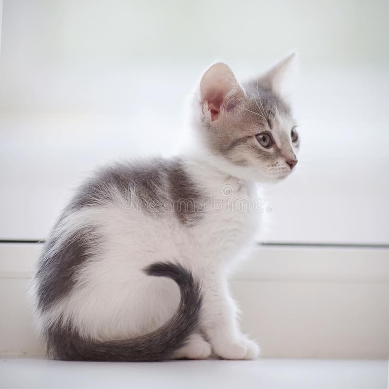 O gatinho manchado doméstico senta-se em uma janela imagens de stock