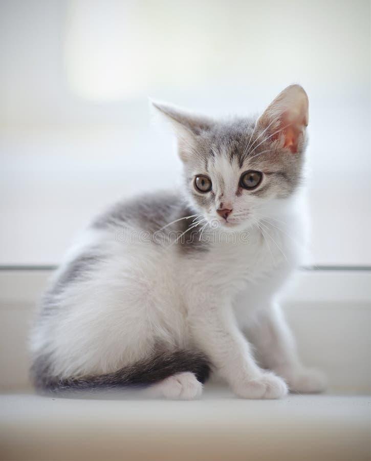 O gatinho manchado doméstico senta-se em uma janela foto de stock