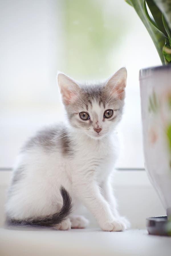 O gatinho manchado doméstico senta-se em uma janela imagem de stock