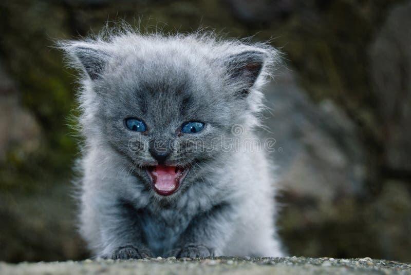 O gatinho pequeno imagens de stock royalty free