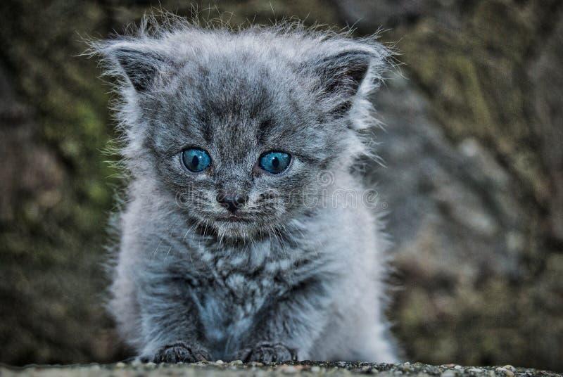 O gatinho pequeno imagem de stock royalty free