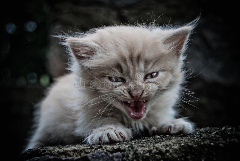 O gatinho pequeno fotografia de stock