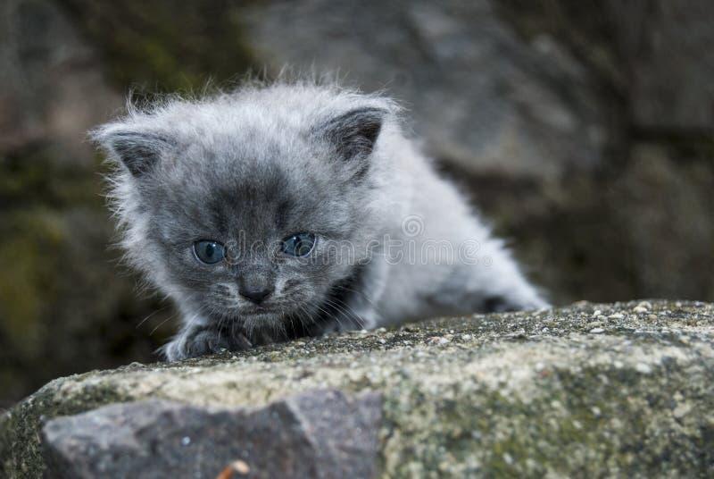 O gatinho pequeno foto de stock