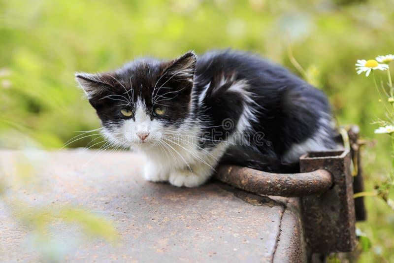 O gatinho pequeno com fome está sentando-se apenas na rua e olha imagem de stock