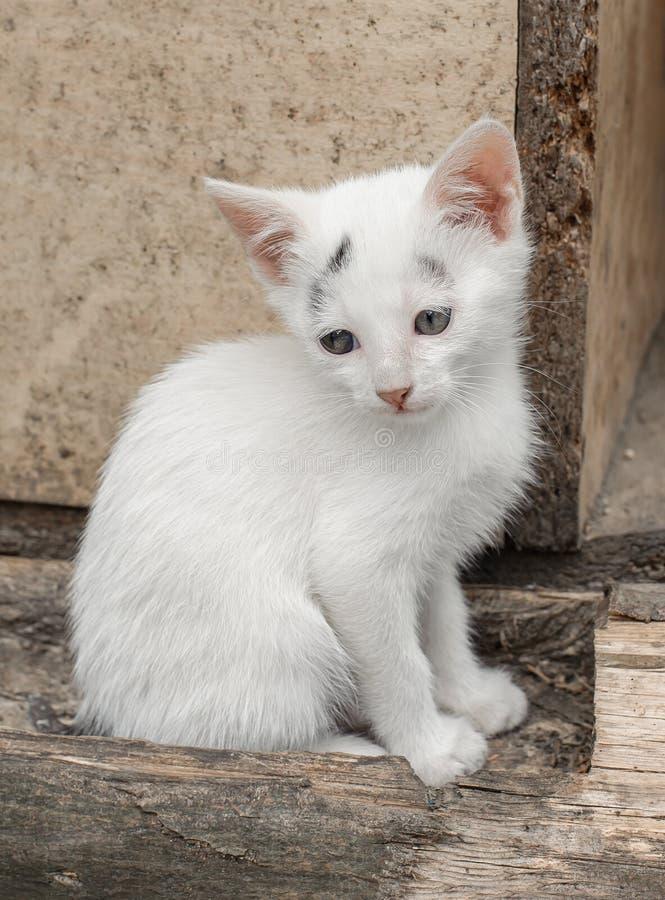 O gatinho pequeno de Adoroble senta-se na frente de sua casa imagens de stock royalty free