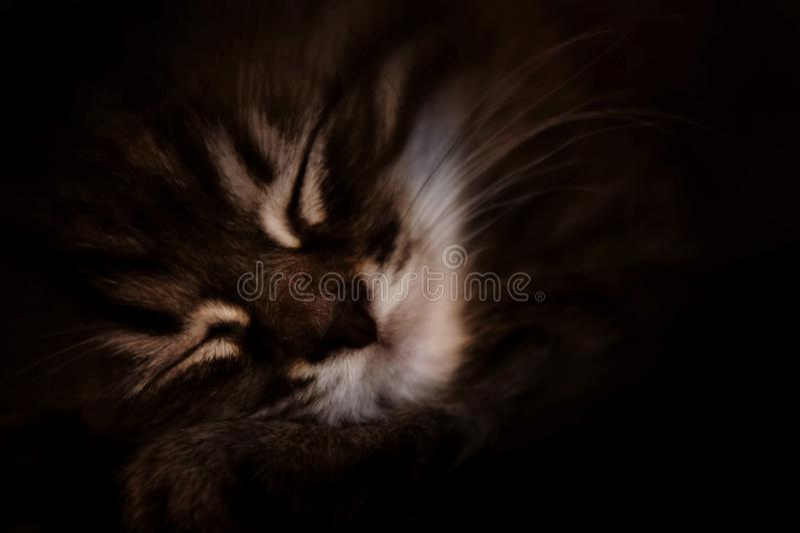 O gatinho pequeno do gato malhado dorme close-up close-up do gato do focinho vaquinha bonito listrada que dorme na obscuridade Fu fotos de stock