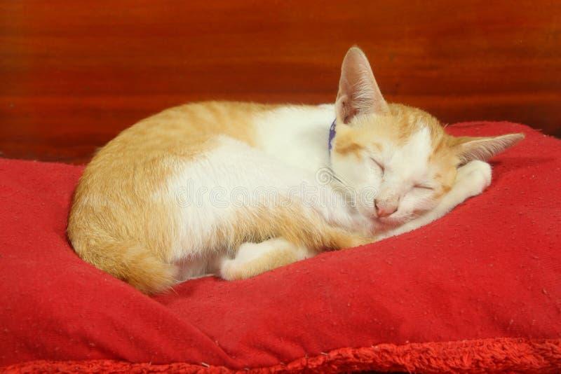 O gatinho pequeno do gato tem o sono amarelo e branco da pele no descanso vermelho fotografia de stock royalty free