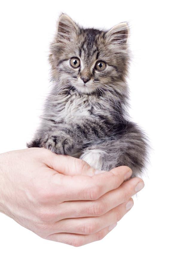 O gatinho pequeno nas mãos do homem fotografia de stock royalty free