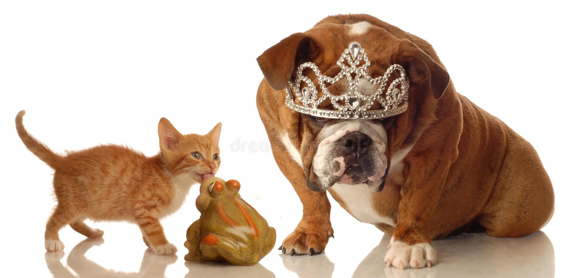 O gatinho que beija o sapo mas começ o cão imagem de stock royalty free