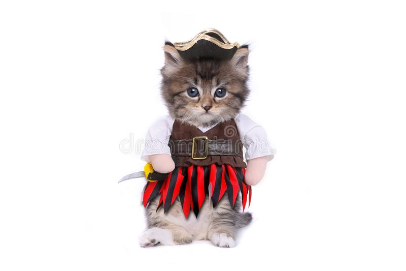 O gatinho sério no pirata inspirou o traje da roupa imagem de stock royalty free