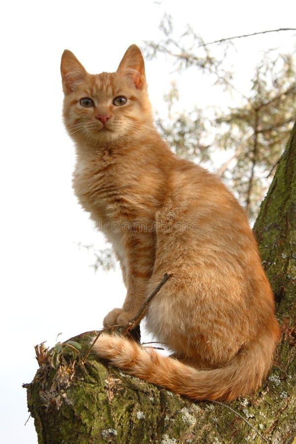 O gatinho senta-se em uma árvore foto de stock