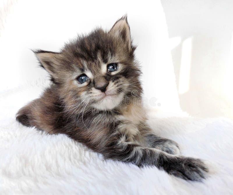O gatinho triste do olho foto de stock