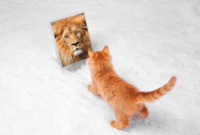 O gatinho vermelho em um fundo branco joga mentiras dos olhares fotografia de stock