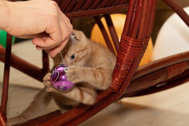 O gatinho vermelho joga com bola do Natal fotos de stock