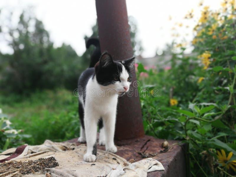 O gato é um predador para fora na caça fotografia de stock royalty free