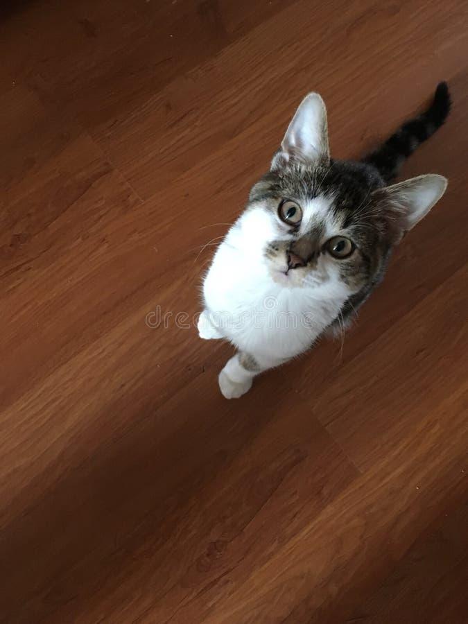 O gato foto de stock