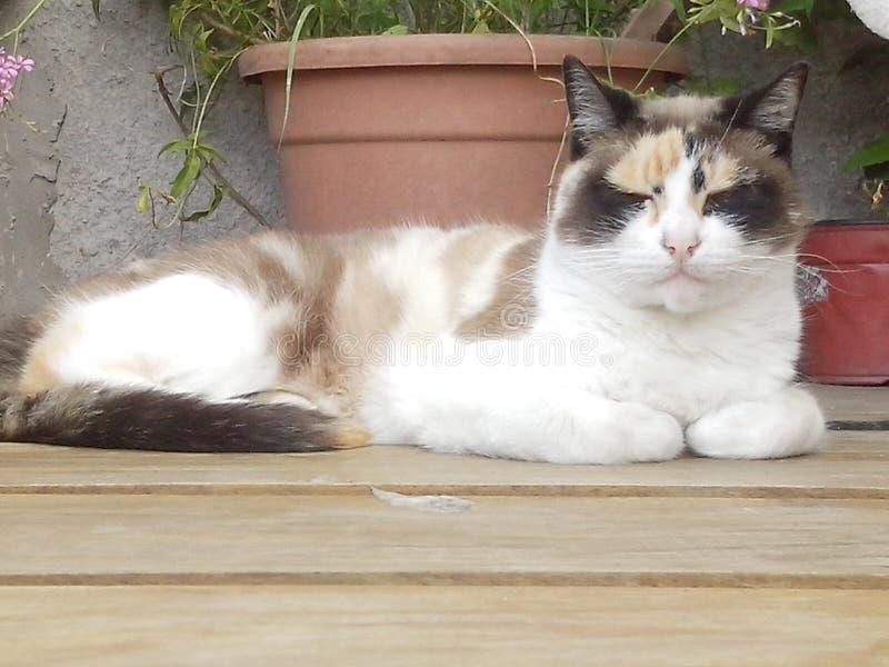 O gato fotografia de stock