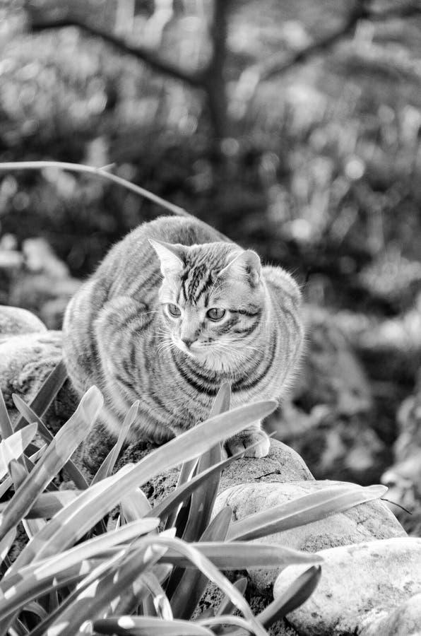 O gato imagens de stock