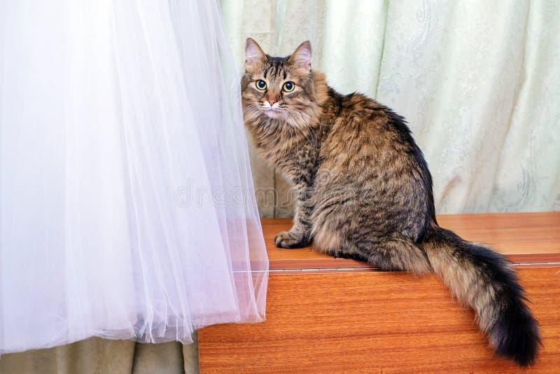 O gato ao lado do vestido de casamento imagens de stock royalty free