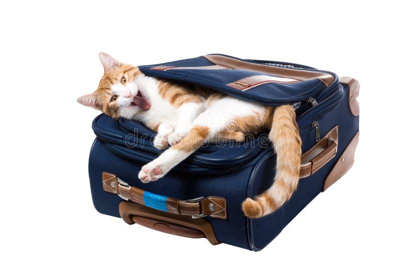 O gato boceja encontrando-se no bolso de uma mala de viagem azul foto de stock royalty free