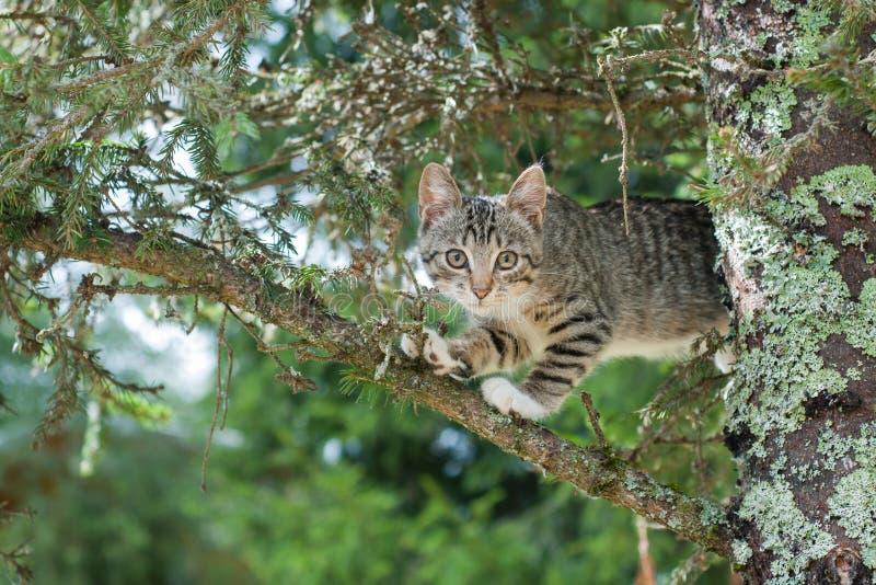 O gato bonito está encontrando-se na árvore, gatinho pequeno em um ramo, animais de estimação bonitos tem três cores em um fundo  imagem de stock