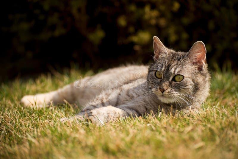 O gato bonito está fora na natureza imagem de stock royalty free