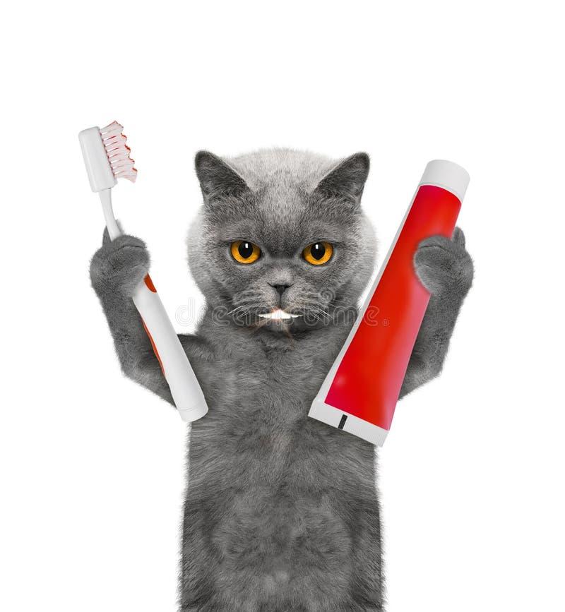 O gato bonito limpa os dentes com uma escova de dentes Isolado no branco foto de stock