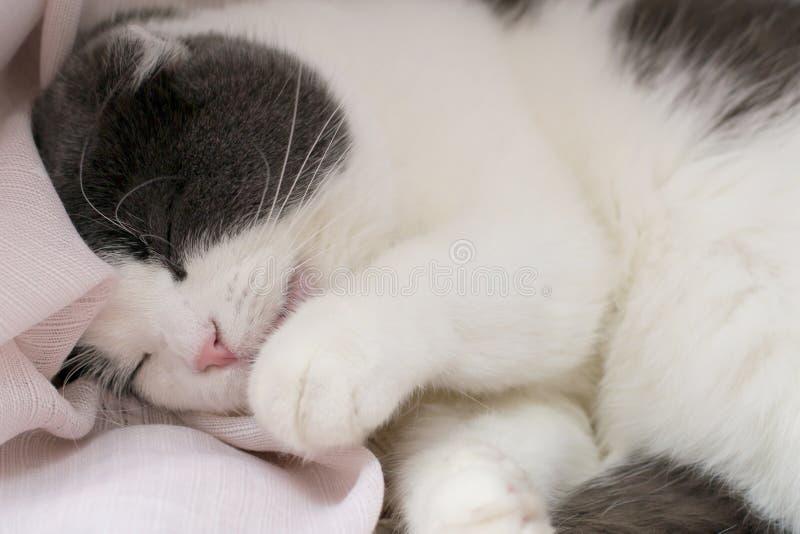 O gato bonito macio encontra-se na soleira, lambe-se sua pata e lava-se seu corpo imagem de stock royalty free