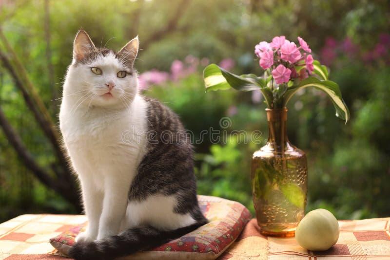 O gato bonito masculino de Tom com flox floresce no vaso no fundo verde do jardim imagens de stock