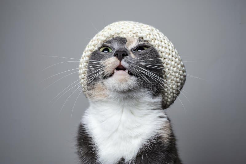 O gato bonito novo, em um chapéu feito malha elegante, levantou sua cabeça acima e miados fotos de stock royalty free