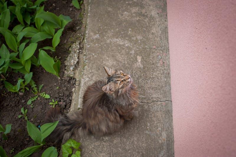 O gato bonito bonito senta e espera o alimento fotografia de stock