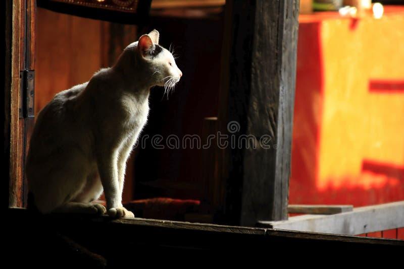 O gato branco senta-se na janela imagem de stock