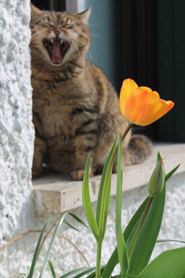 O gato cansado fotos de stock