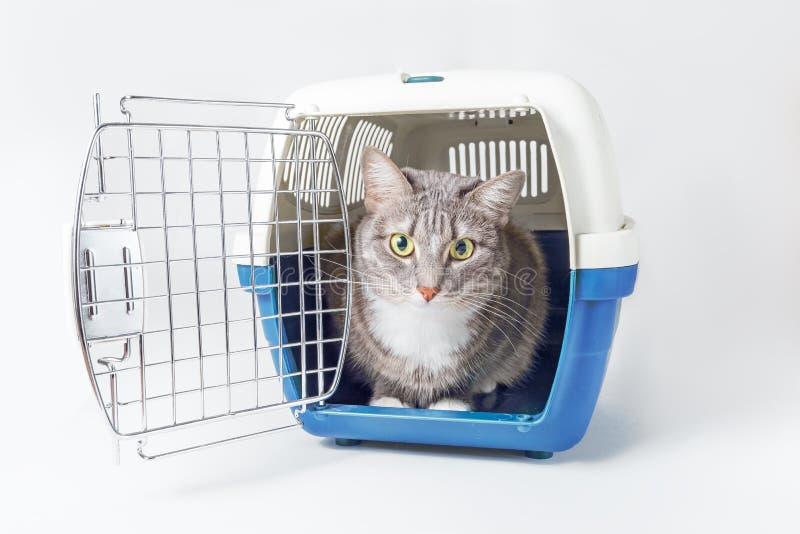 O gato cinzento perdido bonito senta-se em um portador pl?stico do animal de estima??o da gaiola isolado no branco imagem de stock